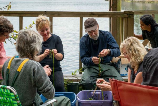 Community groups prepare eelgrass for restoration project