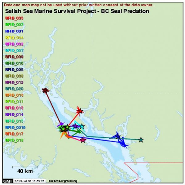 Seal tracking predation website